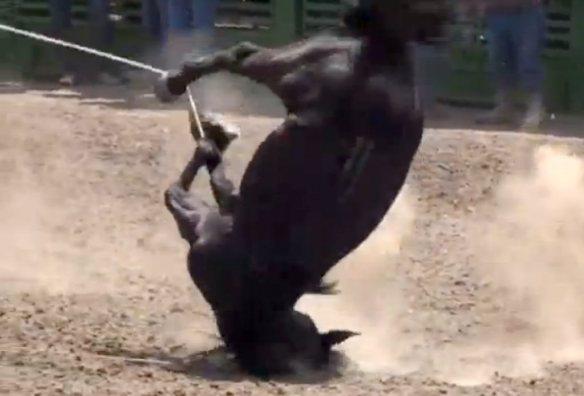 horsetripping3