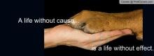 animal_rights-605718