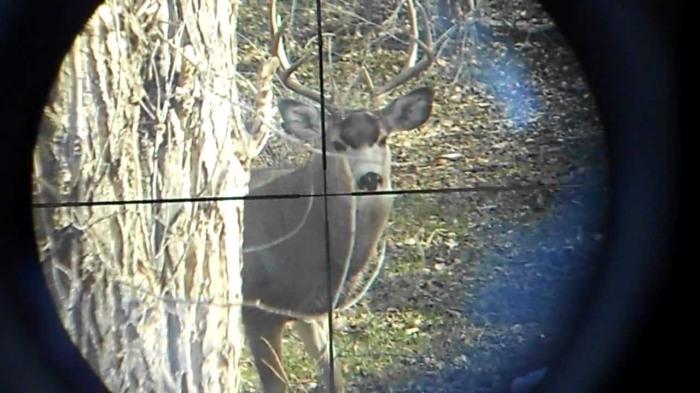 deer in scope