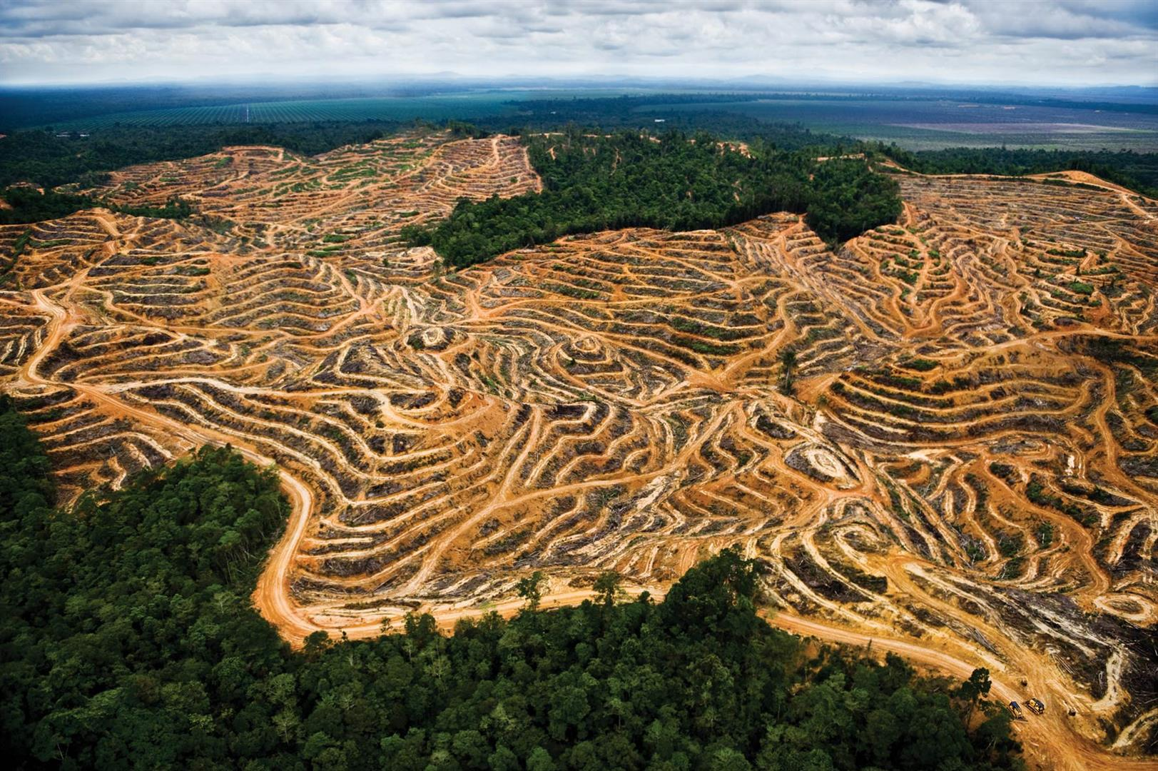 Image result for human destruction of earth