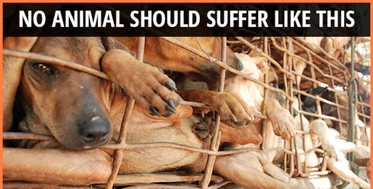Those Who Abuse Animals, Those Who Care, and Those Who Do ...